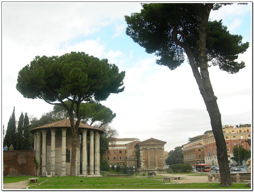 진실의 입 앞의 신전과 이탈리아 소나무.... 이태리의 가로수로 소나무가 많이 있는데 나름 우리나라 소나무 같이 멋있었다..