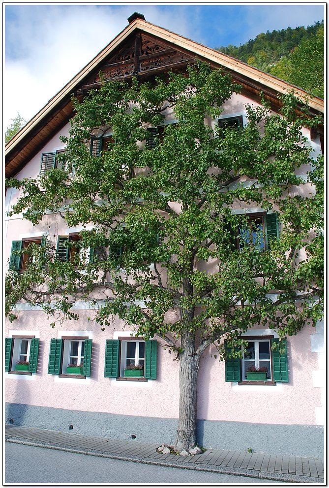 벽에 바짝 붙여 나무를 심어 나무가 책갈피에 끼인 낙엽 처럼 자람.